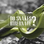 Winter Is Coming: Do Snakes Hibernate?