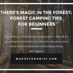 There's Magic In The Forest: Forest Camping Tips for Beginners