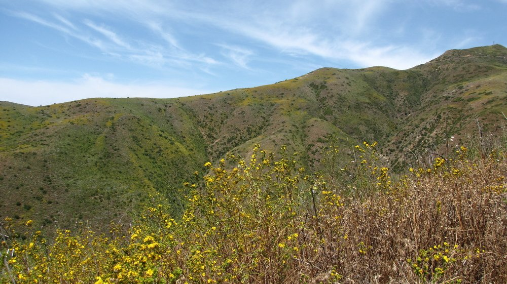 Flowers-in-Solstice-Canyon-Malibu-CA